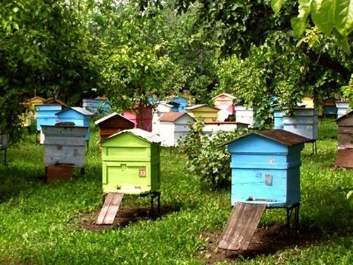Українці все частіше займаються розведенням бджіл фото, ілюстрація