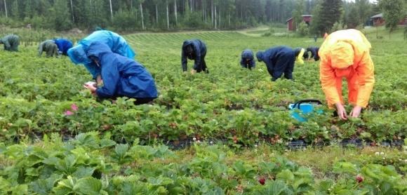 Аграрії закликають адаптувати радянські підходи до сезонних робіт в агросекторі фото, ілюстрація