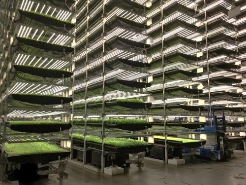1.5-гектарная полностью автоматическая вертикальная ферма обойдется в $40 млн фото, иллюстрация