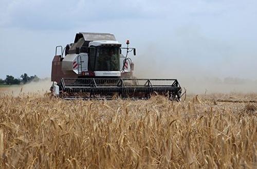 Науковцями ННЦ проведено моніторинг фітосанітарного стану посівів зернових колосових культур на ураженість рослин хворобами фото, ілюстрація