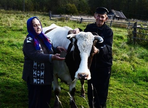 Фермерам і селянам-односібникам не допоможуть розвивати тваринництво фото, ілюстрація