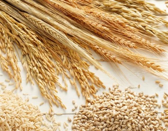 Урожай зерна в Украине  будет ниже 2016 и 2017 годов, - президент Ассоциации землевладельцев и фермеров  фото, иллюстрация