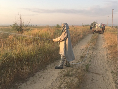 На Луганщині Держпродспоживслужба бореться з нашестям сарани фото, ілюстрація