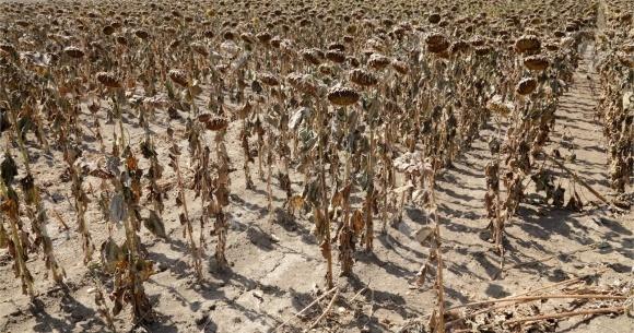 Непригодные почвы ОАЭ будут использовать для выращивания овощей-галофитов фото, иллюстрация