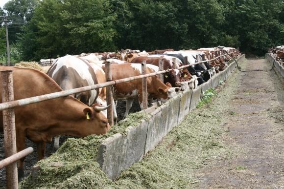 Тваринам більше не колотимуть антибіотики фото, ілюстрація