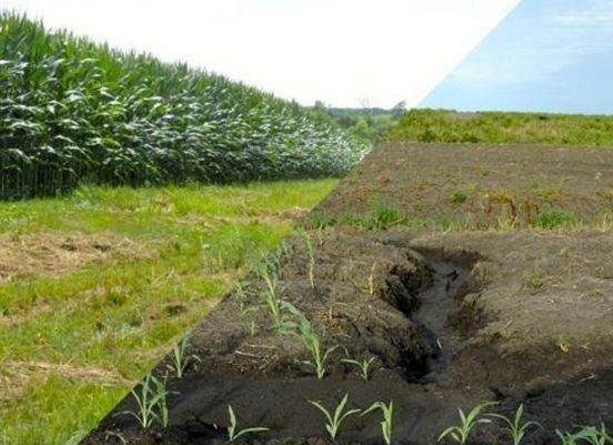 Через істотну ерозію ґрунтів українські аграрії втрачають третину прибутків - Гадзало фото, ілюстрація