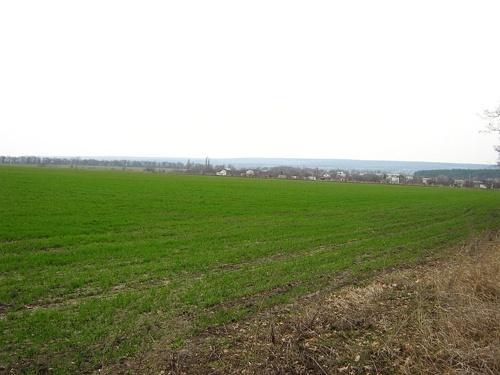 Виживання рослин озимих зернових в Україні - близько 99% фото, ілюстрація