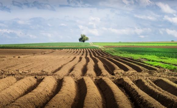 Большинство паевиков готовы продавать землю не дешевле $6 тыс/га фото, иллюстрация