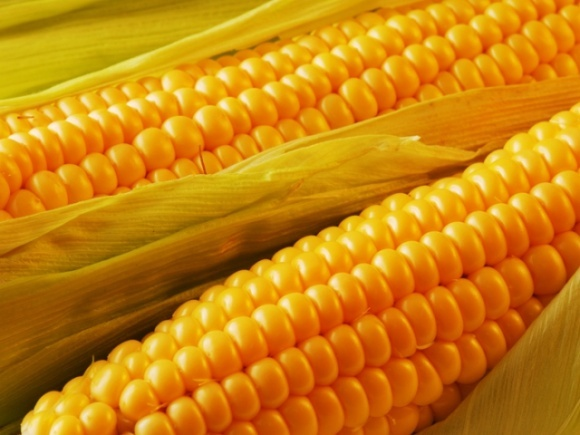 В 2017 году 98% кукурузы экспортировали по «непрямым» контрактам фото, иллюстрация