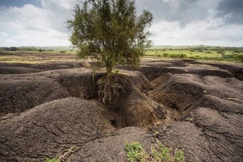 Врятуємо наші ґрунти: пошук шляхів боротьби з ерозією фото, ілюстрація