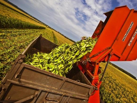 УкрАгроКонсалт повышает прогноз производства кукурузы в Украине фото, иллюстрация