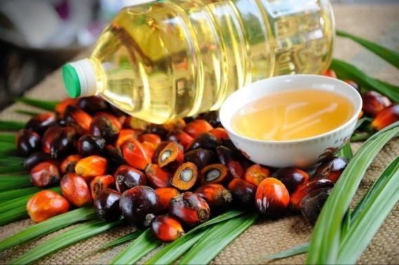 ЕС отказывается от пальмового масла в качестве топлива до 2030 года фото, иллюстрация