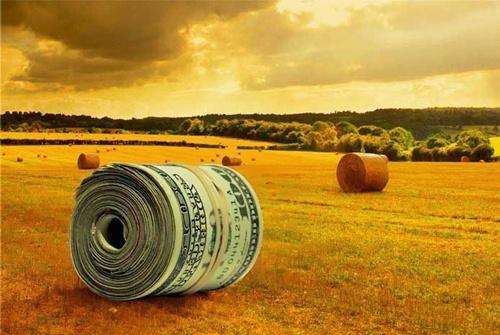 Кредитування під заставу майбутнього врожаю набуває популярності в Україні фото, ілюстрація