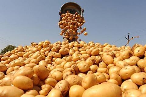 В 2017 году Украина экспортировала 17,6 тыс. т картофеля фото, иллюстрация