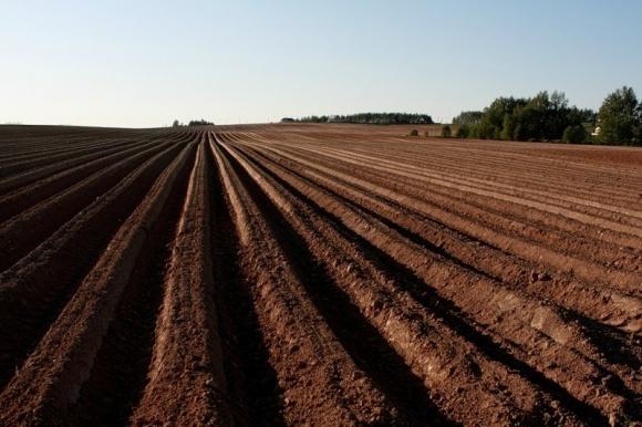 Вологість полів озими в кінці осені стала оптимальною фото, ілюстрація