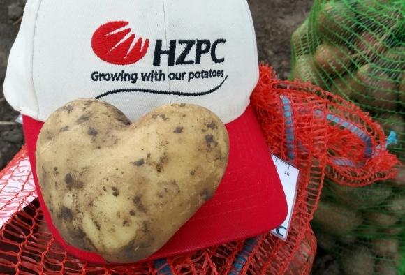 Найбільше міндобрив аграрії вносять під картоплю фото, ілюстрація