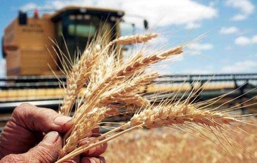Аграрный бизнес рассчитывает на активизацию Зеленским «земельного» вопроса фото, иллюстрация