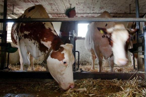 З 52 тисяч фермерських господарств в Швейцарії близько 1000 щорічно закриваються фото, ілюстрація