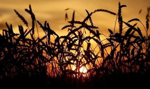 Украинские предприятия увеличили сельскохозяйственное производство фото, иллюстрация