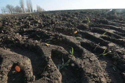 Більше 3 тисяч га посівів постраждало через негоду в Тернопільській області фото, ілюстрація
