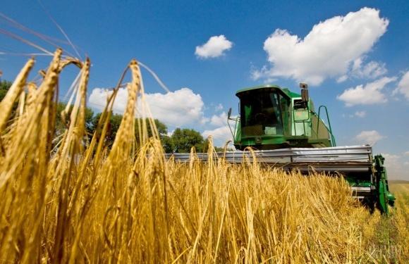 Жнива-2018: Ранні зернові зібрані з половини площ фото, ілюстрація