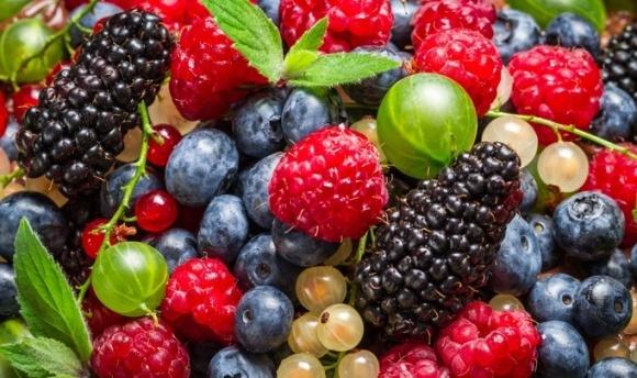 Названы основные критические моменты в развитии ягодного сектора Украины  фото, иллюстрация