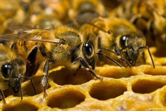 В Украине массово гибнут пчелы: как эту проблему решают в Германии фото, иллюстрация