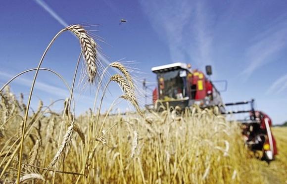 Институт аграрной экономики обнародовал прогноз урожая-2017 фото, иллюстрация