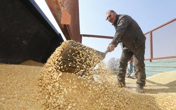 Кіровоградщина майже завершила збирання ранніх зернових фото, ілюстрація