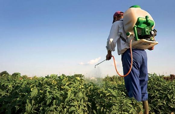 Аграриев предупреждают об активизации болезней сельскохозяйственных культур фото, иллюстрация