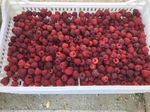 В Польше сложилась критическая ситуация с импортом дешевой малины из Украины фото, иллюстрация