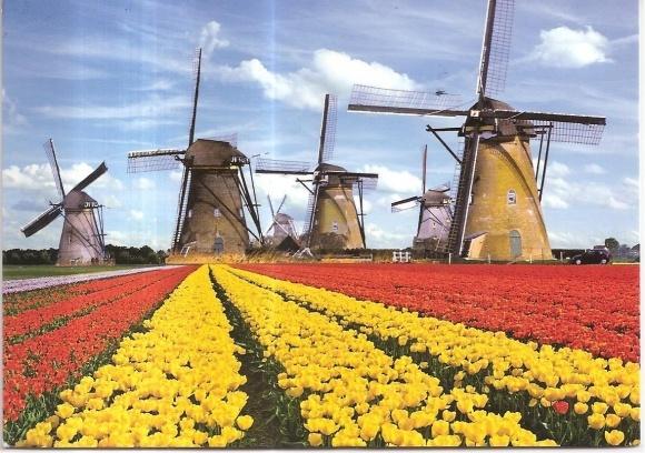 Голландцы смогут удвоить урожайность на украинских полях фото, иллюстрация