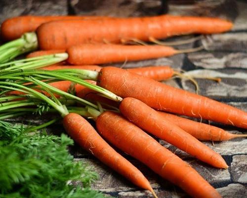 Аграрії Херсонської області почали збирати моркву нового врожаю фото, ілюстрація
