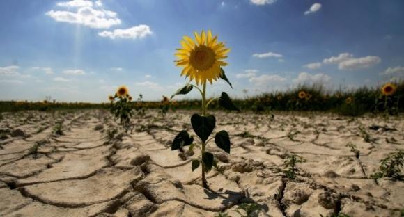 Потери урожая из-за непогоды могут составлять от 10 до 70% - ФАО фото, иллюстрация