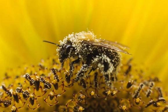 Створено нову Дорожню карту реформування галузі бджільництва  фото, ілюстрація