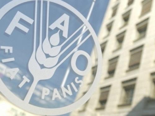 Индекс цен на продовольственные продукты и СГ культуры FAO снизился фото, иллюстрация