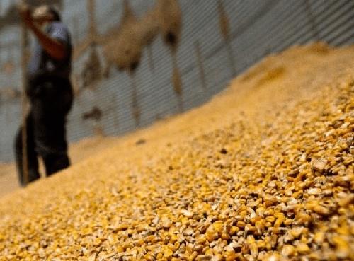 """В """"Аграрном фонде"""" подозревают, что у них украли зерна на 200 миллионов гривен фото, иллюстрация"""