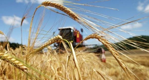 Жнива-2018: вже зібрано 6,2 млн тонн зернових та зернобобових культур фото, ілюстрація