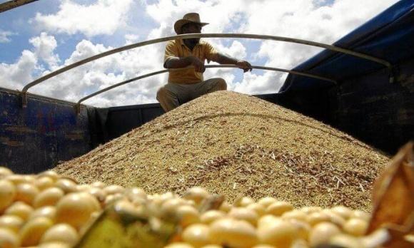 Китай хоче повністю відмовитись від американської сої, згодовуючи худобі менше протеїнів фото, ілюстрація