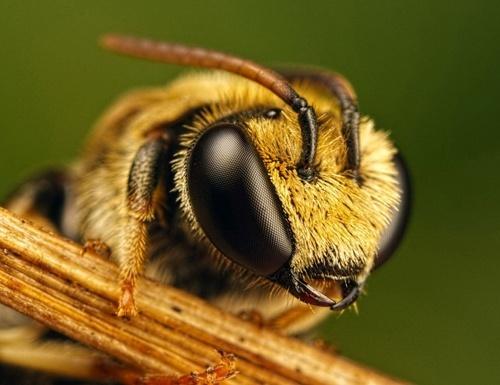 За потраву бджіл хочуть ввести кримінальну відповідальність фото, ілюстрація