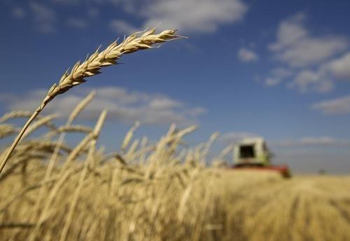 Сельхозпроизводство в Украине выросло на 4.4% фото, иллюстрация