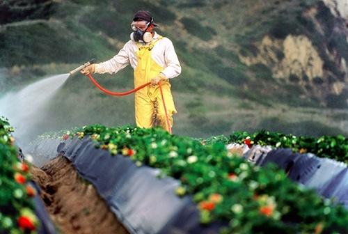 Забезпеченість фермерів ЗЗР для проведення робіт по захисту посівів становить 106%, - Держпродспоживслужба фото, ілюстрація
