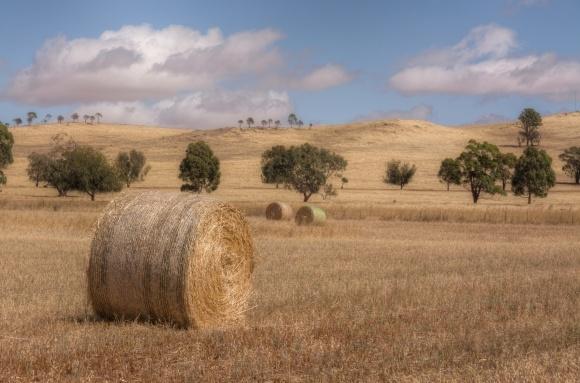 Из-за сильной засухи фермеры в США утилизируют пшеницу на сено фото, иллюстрация