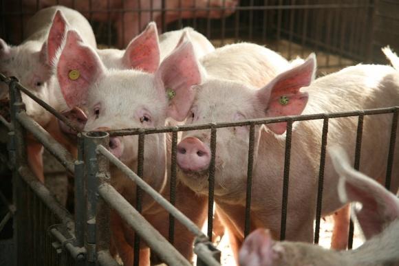 Ціна на яловичину і свинину зросте на 10% фото, ілюстрація