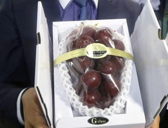 В Японии гроздь винограда продали за рекордные $12 тысяч фото, иллюстрация