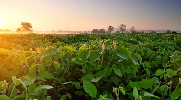 В следующем году большинство аграриев откажутся от сои фото, иллюстрация