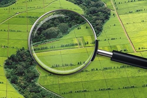 Відомий аграрій розповів, чому ціна гектара землі в Україні буде значно нижчою ніж в інших країнах фото, ілюстрація