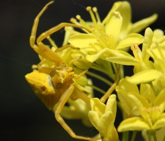 Пауки могут одновременно наносить ущерб и помогать растениям фото, иллюстрация