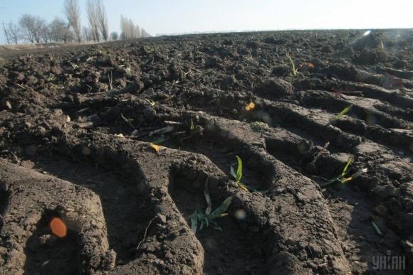 Оренда сільгоспземель в Україні  цьогоріч подорожчала фото, ілюстрація