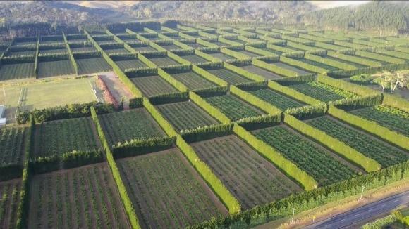 Агролайфхак: принцип создания садозащитных лесополос фото, иллюстрация